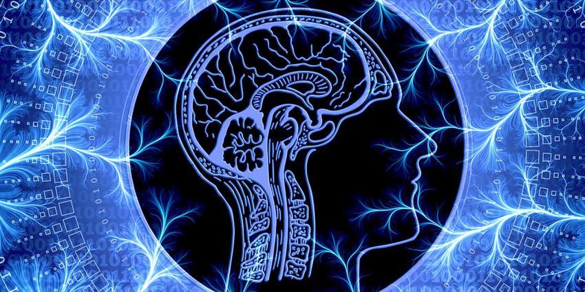 zenuw-hersenen