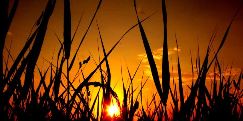 Foto van zon tegenlicht   Archief EHF