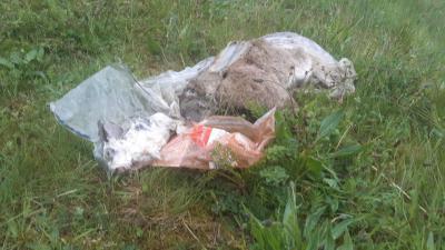 Foto van dode dieren in plastic