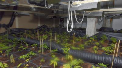 Foto van wietplantage in kelder   Aneo Koning   www.fotokoning.nl