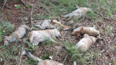 Foto van dode vosjes in Natuurgebied | Politie