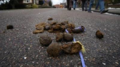 Foto van hondenpoep | Archief FBF.nl
