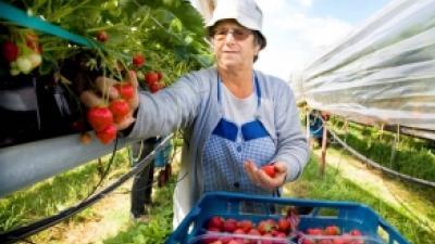 Foto van tuinbouw   Archief FBF.nl