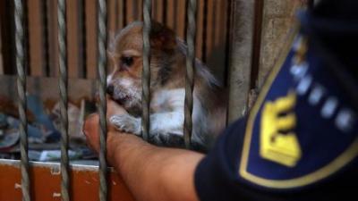 Foto van in beslag genomen pup | Politie