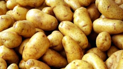Foto van aardappelen   MV