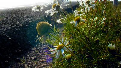 asfalt-stikstof-bloemen