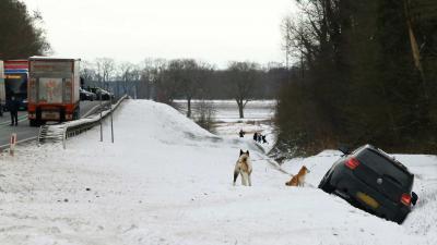 auto-sneeuw-ongeval-honden