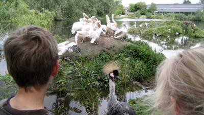 Vogelpark Avifauna in Alphen aan den Rijn is toch weer open.