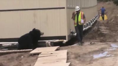 Bouwvakkers nemen collega te grazen met berenpak