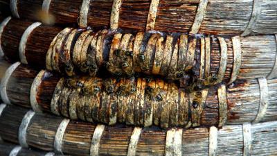 Foto van bijen in korf | Archief EHF