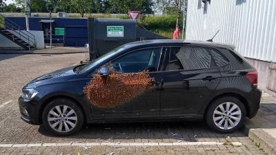 Man treft 20.000 bijen op zijn auto