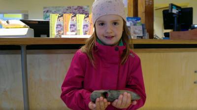 Meisje vindt prehistorische bijl op Texel
