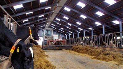 Foto van koe bij melkveehouderij | Archief EHF
