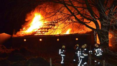 Hond en katten gered bij grote boerderijbrand Wedde