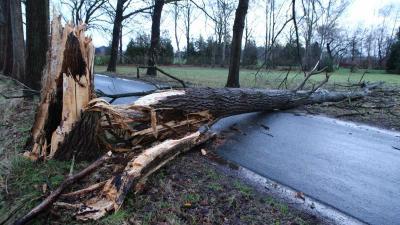 Omgewaaide boom verspert rijbaan aan Nergena in Boxtel