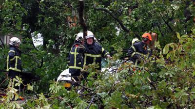 Foto van omgewaaide boom brandweer   Archief EHF