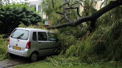 Boom valt op drie geparkeerde voertuigen in Rotterdam