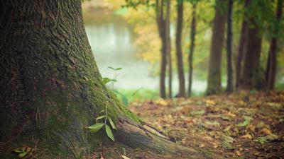Bomen in natuurgebied