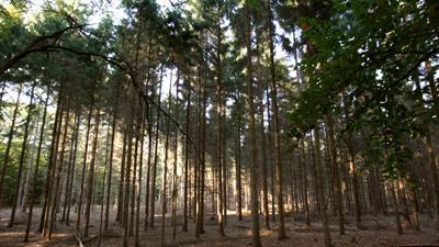 Foto van bomen in bos   Archief EHF