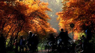 Staatsbosbeheer wil er 100.000 hectare aan bossen bij
