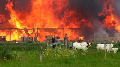Foto van brand palletbedrijf Kampen | Hennie Joesten | www.protief.nl