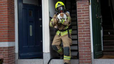 brandweerman-kat