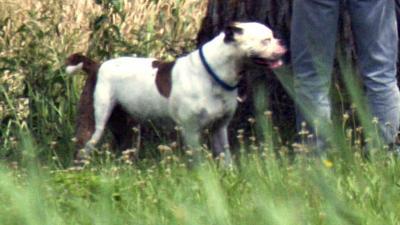 foto van hond | fbf archief