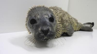 Foto van zeehondenjong Cookie