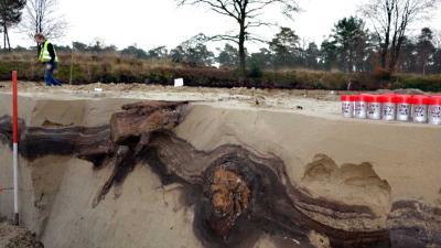 Dennenbomen ontdekt van 13.000 jaar oud uit laatste ijstijd in Utrecht