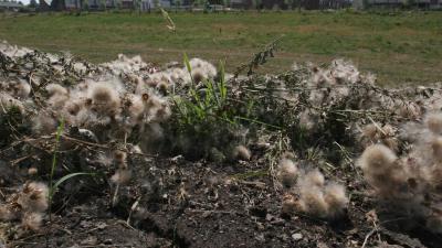 Waterschappen en provincie nemen maatregelen tegen gevolgen droogte