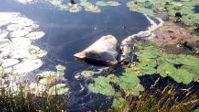Gedumpte hond in water drijvende zak gevonden