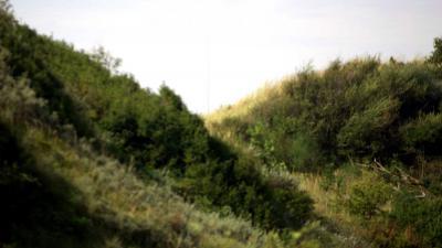 duinen-begroeing-strand