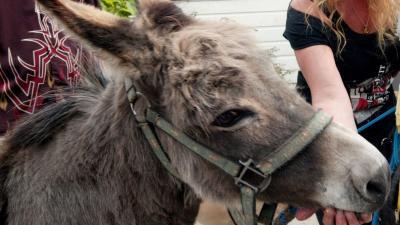 Diefstal donatie spaarpot voor ezels