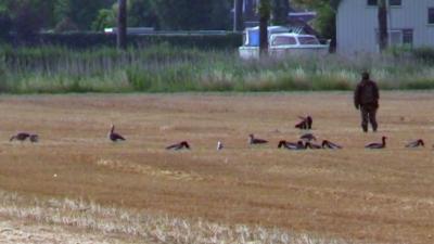 PvdD: Ganzenjagers maken zich schuldig aan ernstig dierenleed