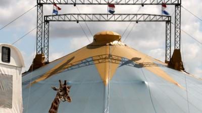 Verbod op wilde dieren in circus