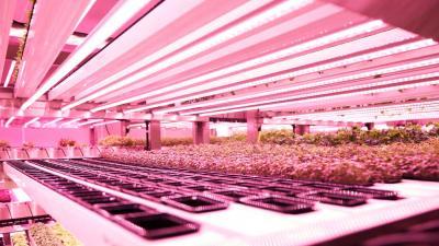 Eerste high tech verticale boerderij in Amsterdam geopend