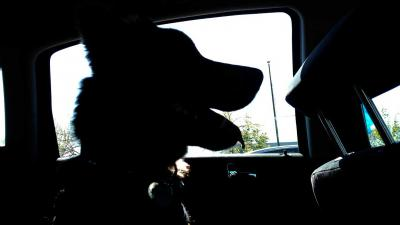 OM eist geldboete van 375,- euro voor achterlaten hond in auto