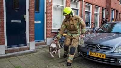 Drie honden gered bij woningbrand Schiedam