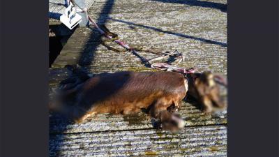 hond-dood-lint-nek-Sloterparkbad