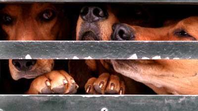 Foto van honden in hok   Archief EHF