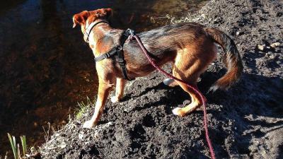 hond-tuigje-riem-sloot