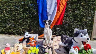 hond-vrijmarkt-maarn