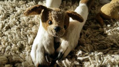 Doorzoekingen naar illegale hondenhandel