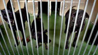 honden-hok-tralies