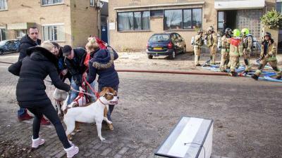 Brandweer redt zes honden uit brandend bedrijfspand Vlaardingen