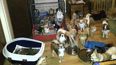 Foto van veel honden in woning   Politie