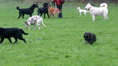 foto hondenuitlaatveld   archief fbf