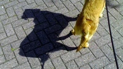 hond-riem-uitlaten