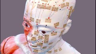 Foto van hoofd schedel model   Archief EHF