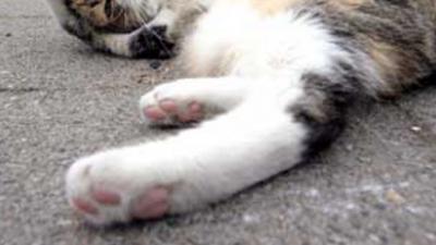 Kattenziekte in dierenasiel in Ede kost 32 katten het leven